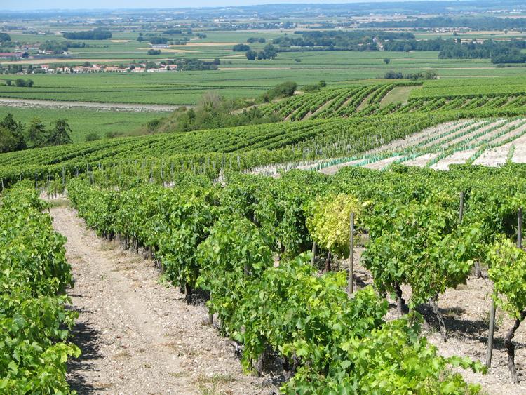 druiven-paradijs-gaard-uitzicht